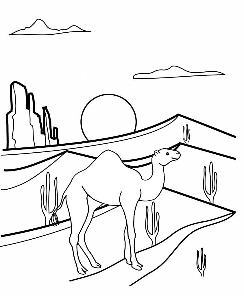 Beautiful Camel Desert Cactus Coloring Page