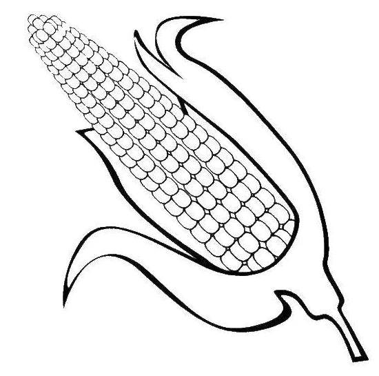 Ear of Corn Coloring Page for Kids