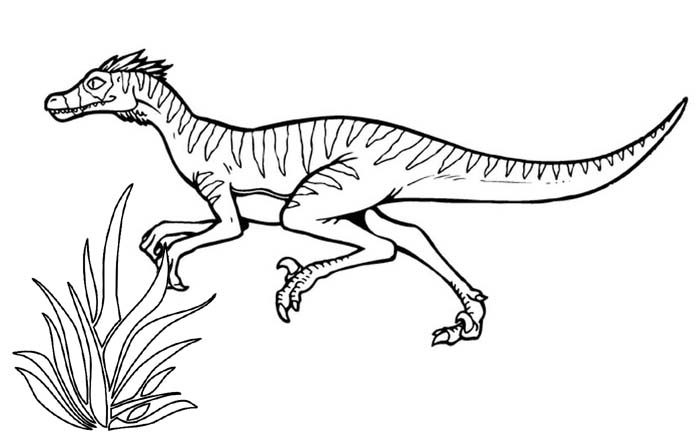 top velociraptor coloring page for kids