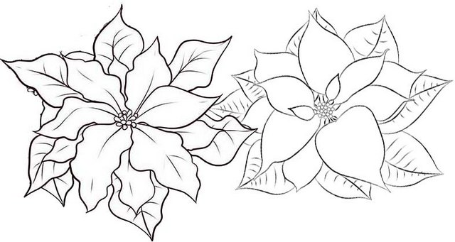 Poinsettia Christmas Flower Coloring Page