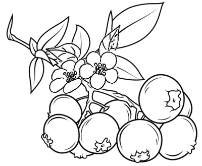 fruit cherries coloring page