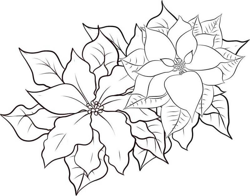 poinsettia flower garden coloring page