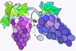 Six Fun Grape Coloring Pages for Preschool Children