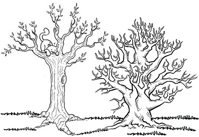 deciduous forest fall tree coloring page