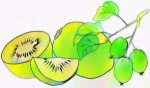 9 Fun Kiwi Fruit Coloring Pages for Preschoolers