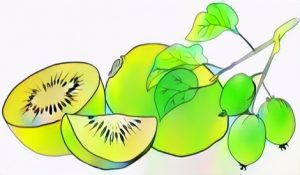 Kiwi Fruit Coloring Work from Kenzy
