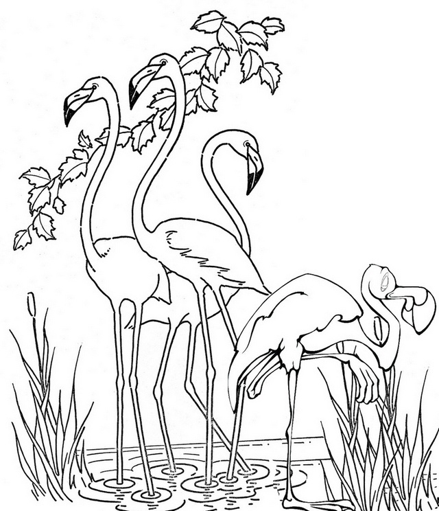 Roseate Spoonbill and habitat Coloring Page
