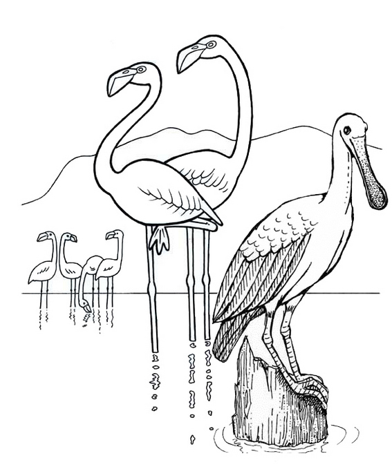 Wonderful Flamingo with Mountain Scenery Coloring Page