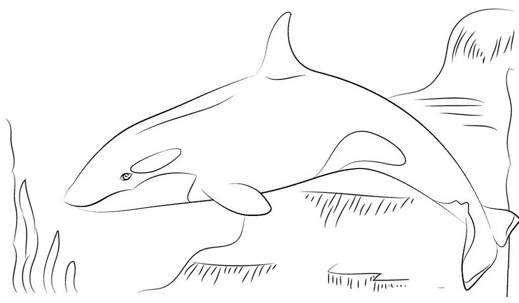 killer whale coloring page for children