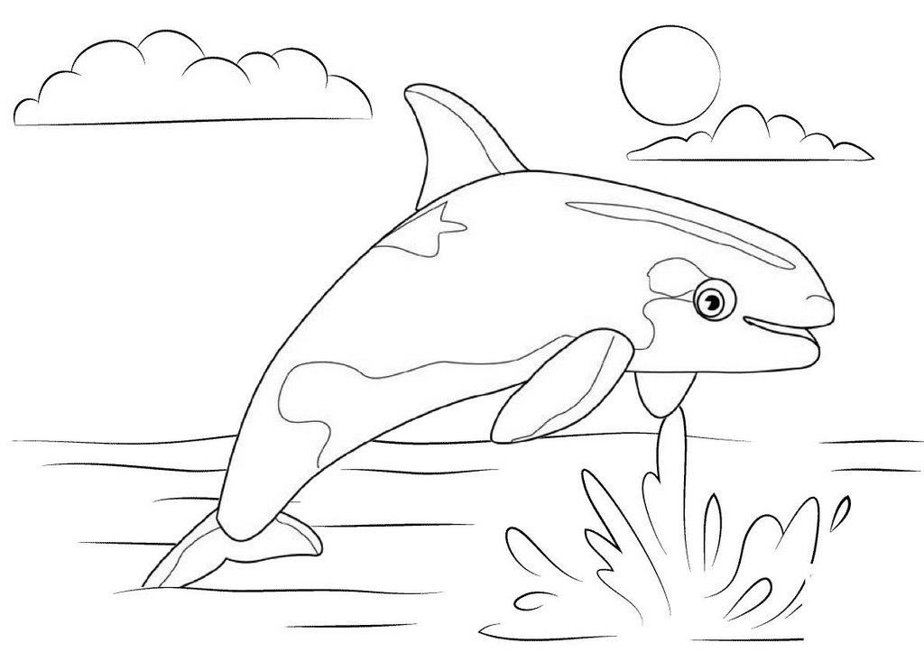 killer whale marine coloring pages