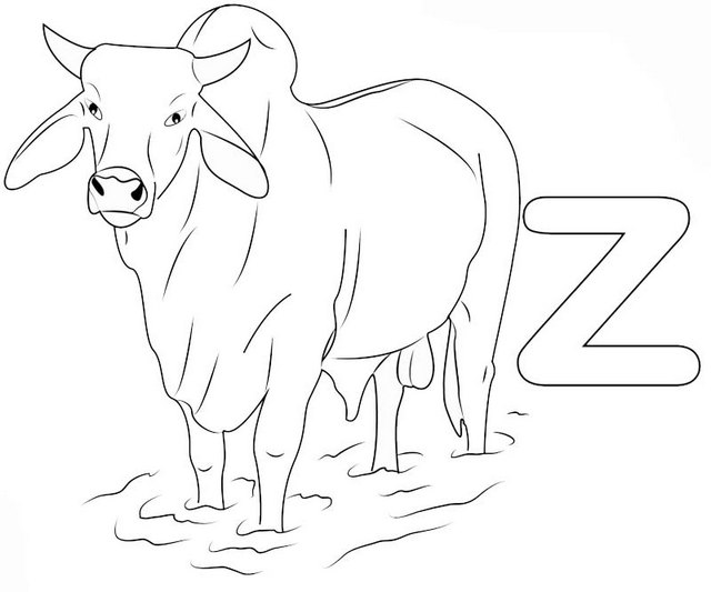 Alphabet Z for Zebu Animal Coloring Pages