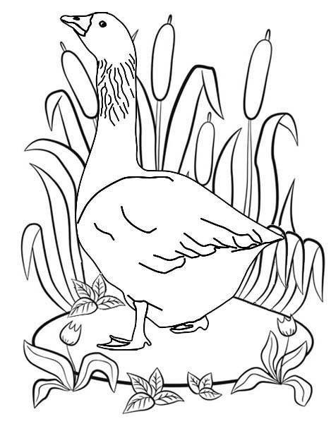 Beautiful Goose Coloring Page
