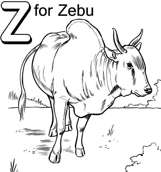 Letter Z for Zebu Coloring Page