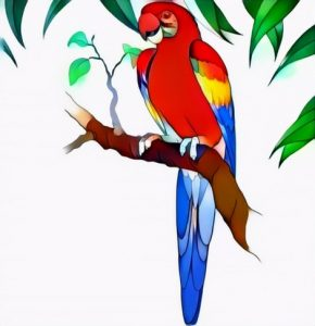 Macaw Bird Coloring Work from Ali