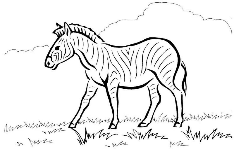 Zebra Stripes Coloring Page