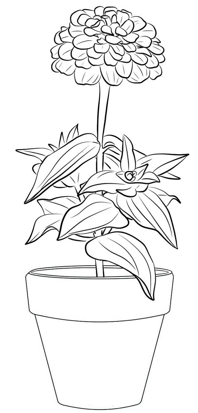 Zinnia Flower in Pot Coloring Page
