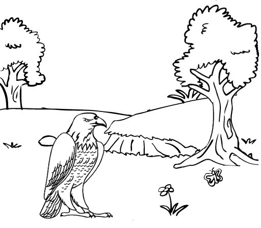 eagle landed on the soil coloring page