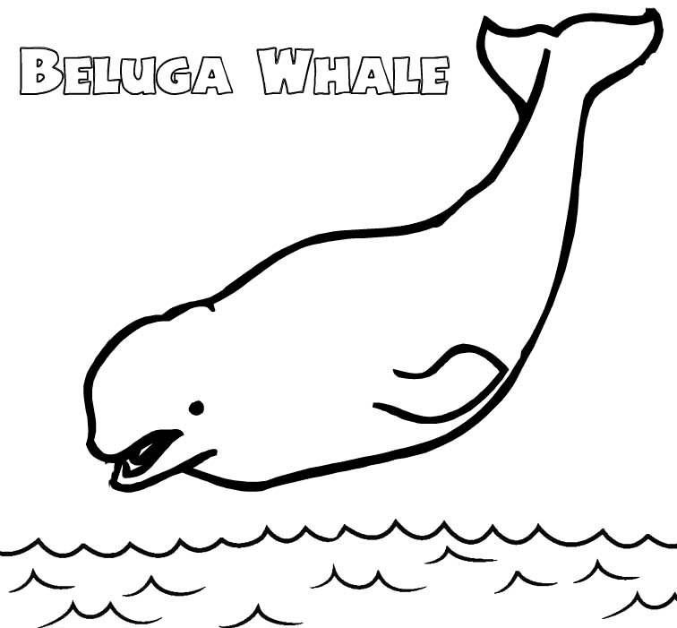 funny beluga whale coloring page