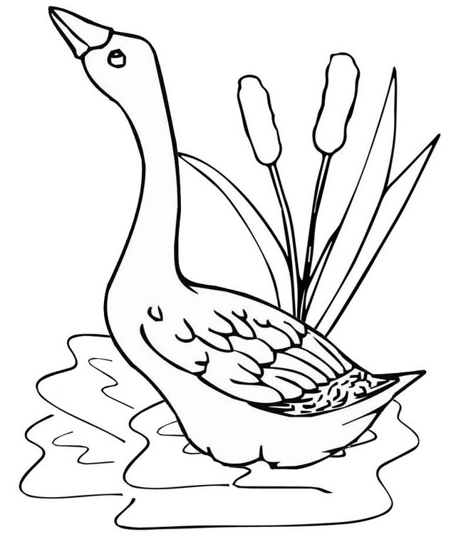 goose in a pond coloring page