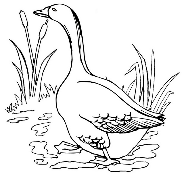 goose living in habitat coloring page