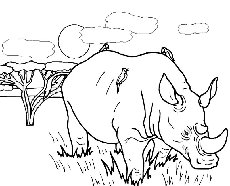 great rhinoceros in savanna coloring page