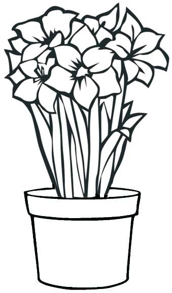 lily flower in pot coloring age