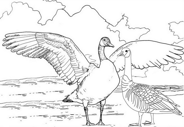 realistic goose try to fly coloring page