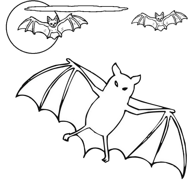 best bat animal coloring page for kids