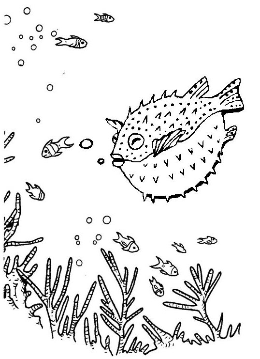 Amazing puffer fish in deep sea coloring page of blowfish