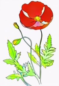 Poppy Flowers Coloring Work from Tina