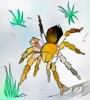 #5 Beautiful Tarantula Coloring Pages for Relaxing