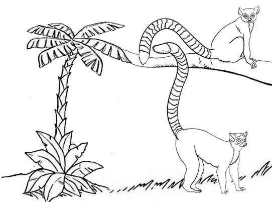 adorable lemur coloring pages for kids