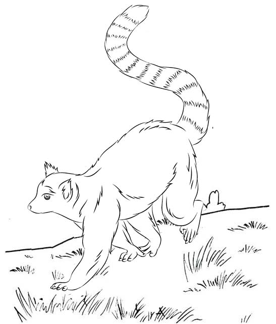 best lemur coloring page for kids