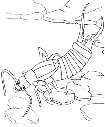 earwig creeping up coloring page