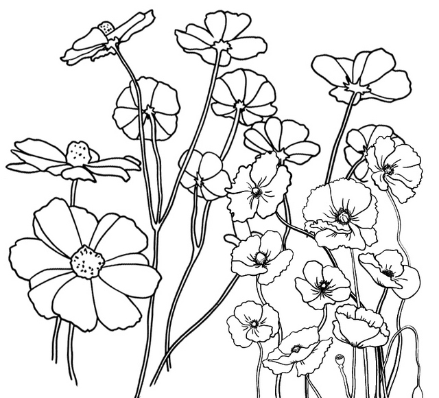 poppy floriculture coloring page