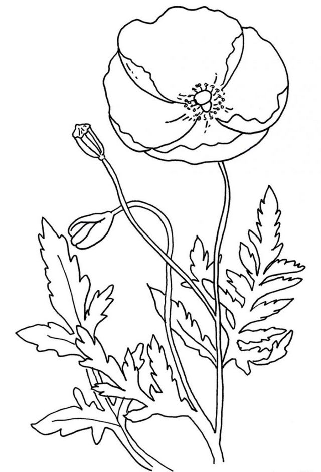 poppy flower coloring pages for kids with many color full poppies flowers mega wallpapers 5