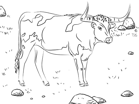 real bull coloring page for kids