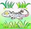 Top Ten Real and Cartoon Gecko Coloring Pages for Children