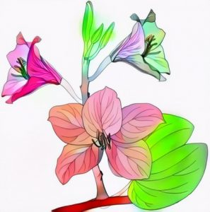 Orchid Flower Coloring Result from Students Work Creation