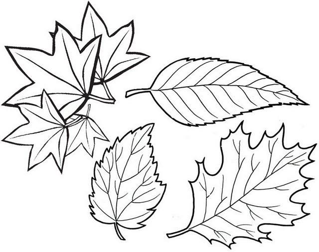 Beautiful Leaves coloring page