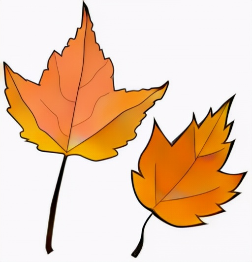 Maple tree leaf coloring result from student to inspire color options