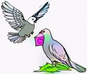 Pigeon Love Coloring Work Result for beautiful arts