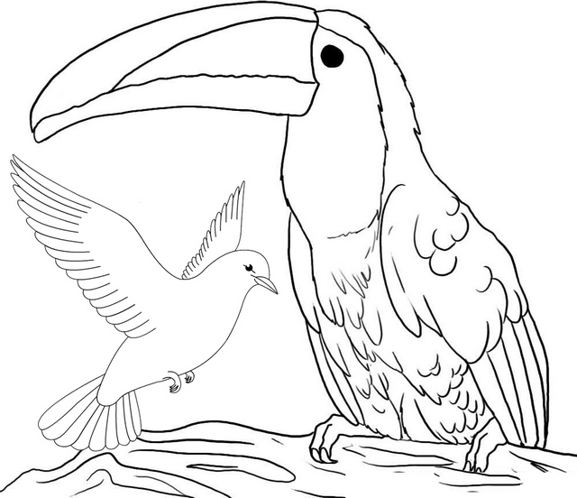 Pigeon and Toucan Coloring Pages of Bird
