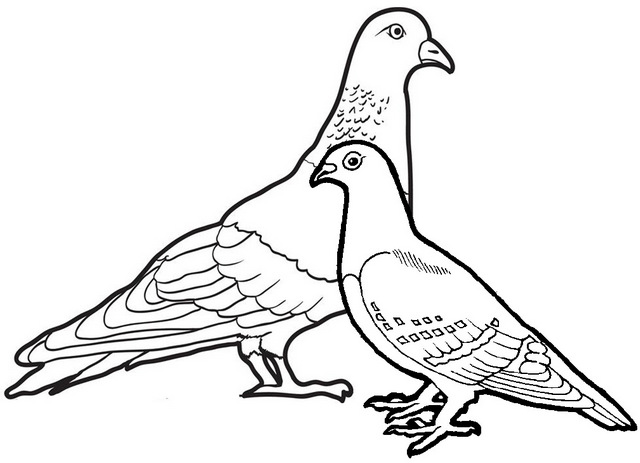 beautiful pigeon coloring page for kids