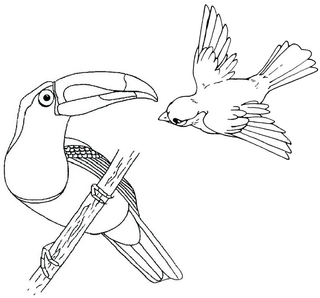 beautiful toucan coloring page of bird flying