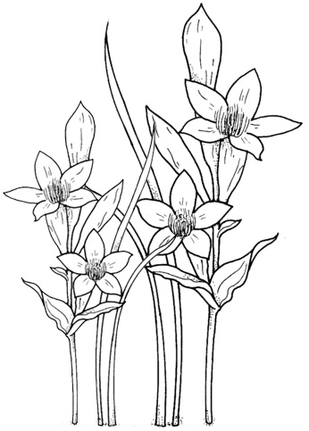 daffodils garden coloring page of flowers