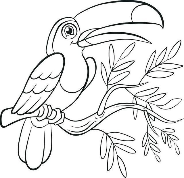 fun toucan bird coloring page