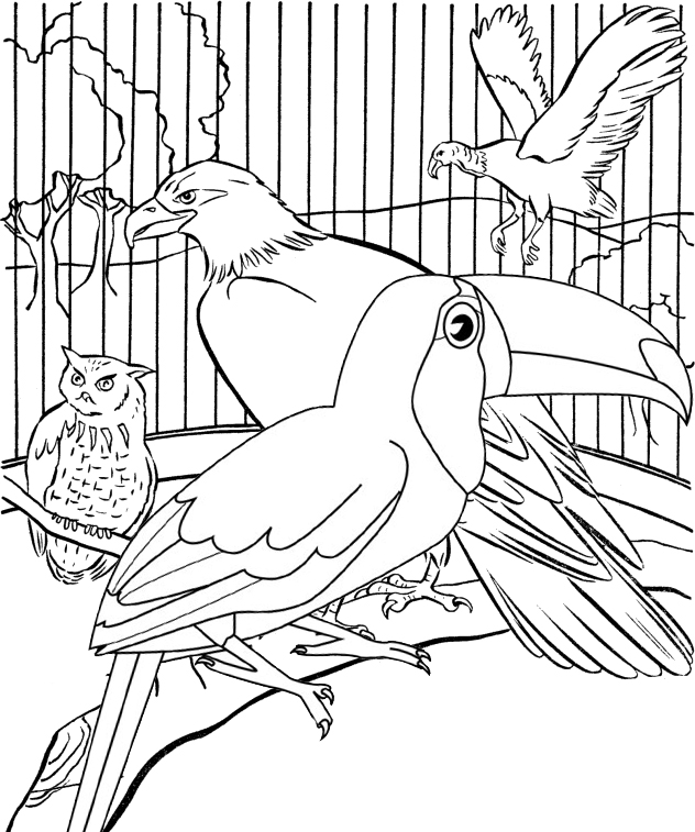 toucan eagle and owl coloring page of bird