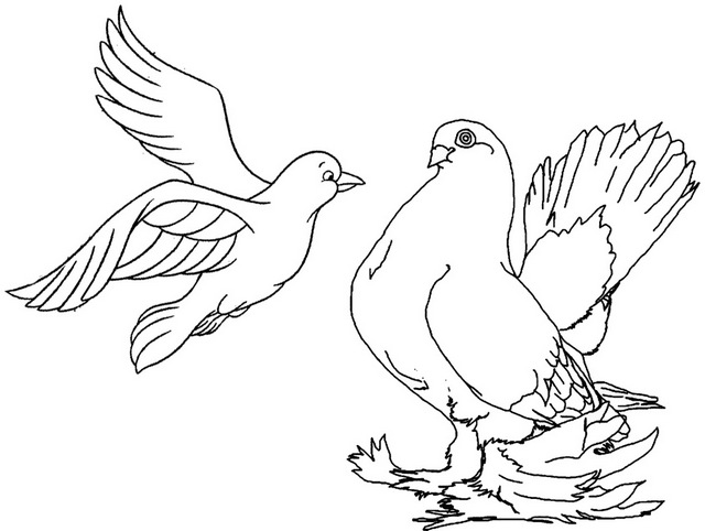 two piegons meeting coloring page