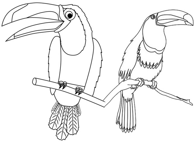 two toucans alighting tree coloring page